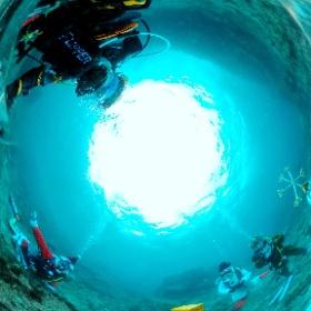 2020/12/08 伊豆海洋公園、水中クリスマスツリー #padi #diving #フリッパーダイブセンター #IOP #theta #theta_padi #theta360 #群馬 #伊勢崎 #ダイビングショップ #ダイビングスクール #ライセンス取得 #X'mas #クリスマスツリー