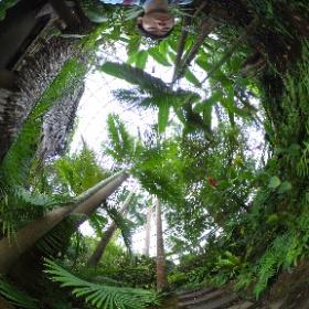 夢の島熱帯植物-Bゾーン