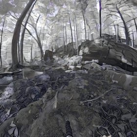 Forest fusion between Prisma app and theta360 #theta360