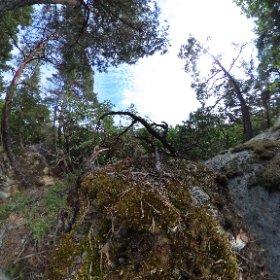 """Paraplyträd nr 6 """"Bonsai Tallen"""" i Skarnhålans gammelskog. Genom att sponsra trädet skyddar du det och dess närmaste omgivning för evigt. https://naturarvet.se/paraplytrad-och-skogsrutor-i-skarnhalan/ #theta360"""