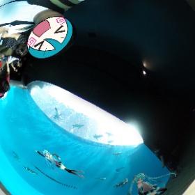 うみがたりのペンギン水槽 #miku360 #うみがたり #theta360