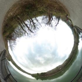 春の散歩道:福島大池、夕暮れの水鳥 #sakura3d