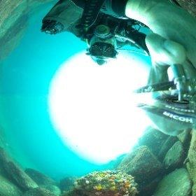 2020/04/03 大瀬崎・一本松 #padi #diving #FLIPPER-dc #フリッパーダイブセンター #大瀬崎 #theta #theta_padi #theta360 #群馬 #伊勢崎 #ダイビングショップ #ダイビングスクール #ライセンス取得