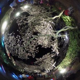 石舞台古墳 夜桜ライトアップ360° 4月6日までです。 http://asukamura.com/?p=8111 #theta360