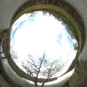 春の散歩道:通路沿いの芽吹き始めた樹木 #sakura3d