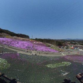ジュピアランドひらたの芝桜です、まだ全部咲いてはいないみたいだけど、芝桜祭りのため人は多かったです #theta360
