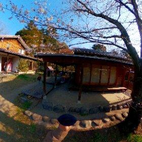 白組のお庭の桜の前で    #sakura3d