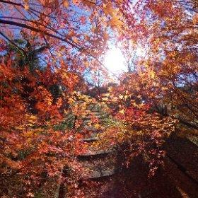 松山市野外活動センターの紅葉。彩り豊かでいい色合い。 #momiji3d #theta360