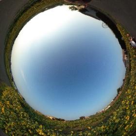 夕方のソレイユの丘、ひまわりがきれい!2019年8月終わりのある日。ひまわりを見て癒される! ドイツ式カイロプラクティック逗子整体院 www.zushi-seitai.com  #theta360