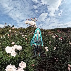 rose #miku360