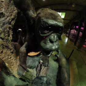 Attack of the monkey's #monkey #animals #360 #vr #virtualreality #museum #theta360