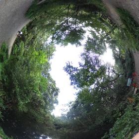 自然教育園です。都内と思えない素敵な自然公園です。 歩くの楽しいですよ。 ドイツ式カイロプラクティック逗子整体院 腰痛、膝痛の不調ほぐして楽になりませんか? www.zushi-seitai.com  #theta360