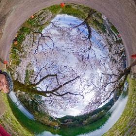鎌北湖 THETA Z1 RAW現像 #sakura3d #theta360