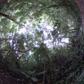 Regenwald im Schutzgebiet Anjozorobe-Angavo, Region Analamanga, zentrales Hochland, Madagaskar, April 2018