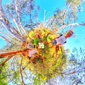 Family friendly and dog friendly Whistlepipe Gully creek 3500m loop track in Kalamunda 138m elevation gain, fresh water ponds, waterfalls, nature n fauna https://trailsperthwa.com/WhistlepipeGully #butterfly3d #theta360