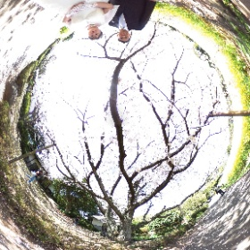 Feel So High!  Kenichi Morinaga photography  https://www.photomoriken.net/  #sakura3d #theta360 #theta360