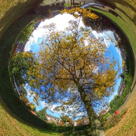 Autumn is in the air  #theta360