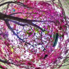 Blooming Tree #theta360