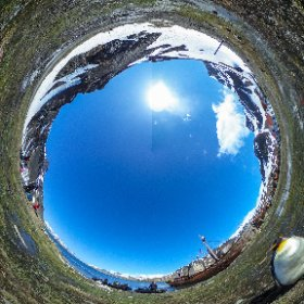 A king penguin waits near the zodiac landing spot at Grytviken, South Georgia Island. #theta360