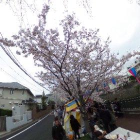 横浜、大岡川花見。 #theta360
