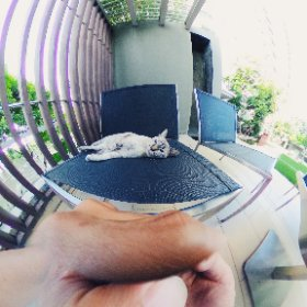 Cozy cat #theta360