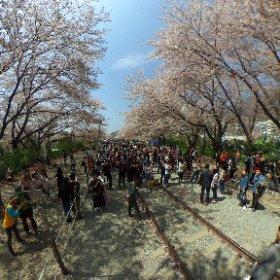 2017/04/08 韓国 鎮海 #theta360