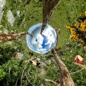 More Twists and turns are  expected in the case of environmentally blocked #AppleDC Athenry. Bats and badgers appealing with #butterfly3d against Apple's development in Galway. #Craicingalway #Galway360  #vr360 #theta360 #theta360uk