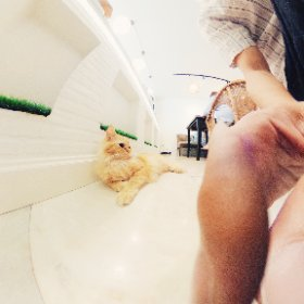 Mohu Mohu Cat Cafe #theta360