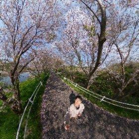 2020/4/8 花見川 桜 #sakura3d #theta360