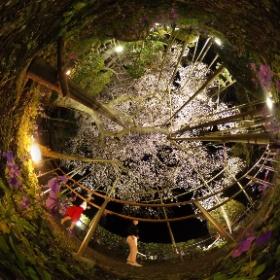#sakura3d #sakura #kamagatani #gifu #ikeda #theta360