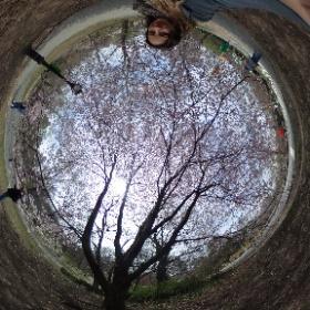 Lente in New York Central Park #theta360