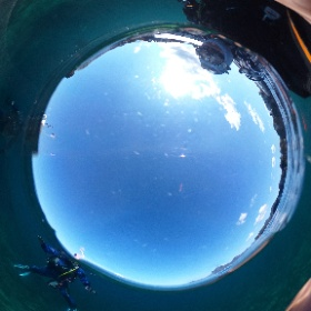 2020/02/09 平沢・東 #padi #diving #FLIPPER-dc #フリッパーダイブセンター #平沢 #theta #theta_padi #theta360 #群馬 #伊勢崎 #ダイビングショップ #ダイビングスクール #ライセンス取得