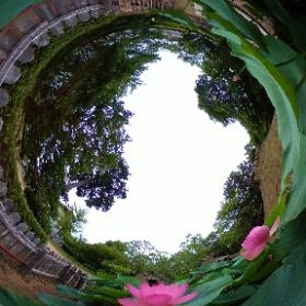 弥生の森歴史公園の大賀ハス   2020/07/03