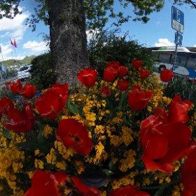 Frühlingsfarben beim Bahnhof #theta360