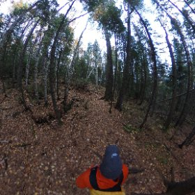 Walking among the pines #algonquin #outdoors #nature #wilderness #travel #landscape #forest #tree #canada #canada_gram #theta360