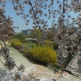 #sakura3d #korea #theta360