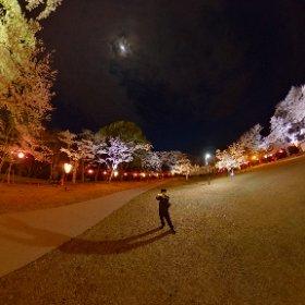 尾関山の桜2020 #theta360