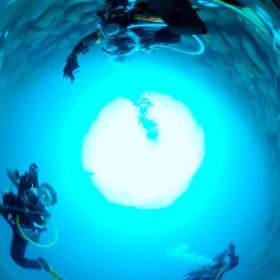 2021/01/28 大瀬崎・柵下 #padi #diving #フリッパーダイブセンター #大瀬崎 #theta #theta_padi #theta360 #群馬 #伊勢崎 #ダイビングショップ #ダイビングスクール #ライセンス取得 #LEFEET