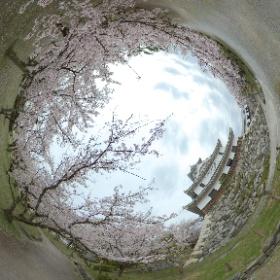 #長浜城 #桜 #湖北 #滋賀 #theta360 #sakura3d