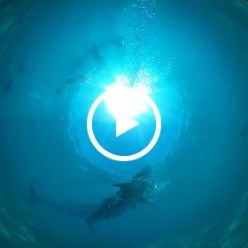 2019/03/21 Oslob/Cebu/Philippines @エメラルドグリーン ダイビングセンター #padi #diving #フリッパーダイブセンター #cebu #theta #theta_padi #theta360