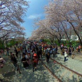 鎮海桜祭り 2017 #theta360