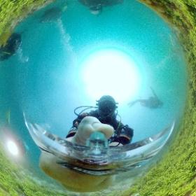 2021/04/03 静浦 #サンゴ #padi #diving #フリッパーダイブセンター #静浦 #theta #theta_padi #theta360 #群馬 #伊勢崎 #ダイビングショップ #ダイビングスクール #ライセンス取得 #padiライフ