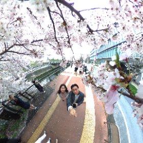 #sakura3d RITS金沢でこのハッシュタグを教えてもらった。