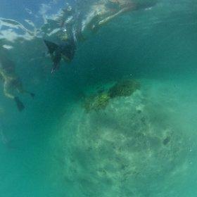 【水中360°!】サンドバーでシュノーケリング☆ #ハワイ #サンドバー #theta360
