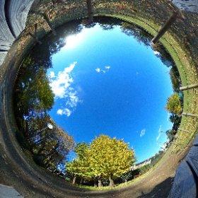 360.kudo.gr.jp #Koganei #Tokyo #Japan #RICHOH #THETA #360 #Panorama #park #autumn #ginkgo #TokyoSuburb #Suburb #イチョウ #秋 #小金井市 #小金井 #東小金井 #梶野公園 #ベンチ #東京郊外 2015/11/27  #theta360