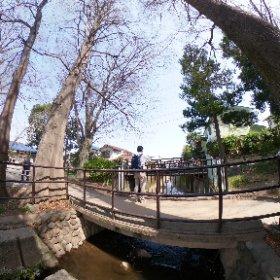 #ちゃらぽこ散歩会 ここから善福寺川