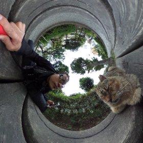 猫とにらめっこ!