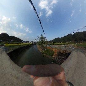 小路口という村に来ました。  菜畑がきれいです! #theta360