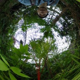 夢の島熱帯植物-謎の植物