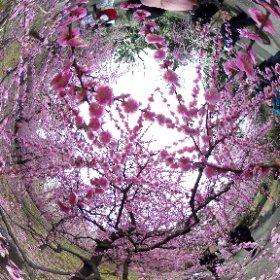 京都・城南宮 #theta360